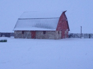 Heavy snow delays feeding due to a bit of tractor trouble.
