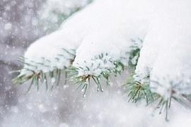snow-in-pine-tree-1265118__180